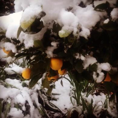July snow 4
