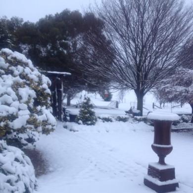 snow july